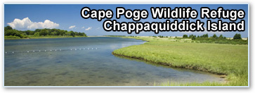 Cape Poge Wildlife Refuge, Chappaquiddick Island